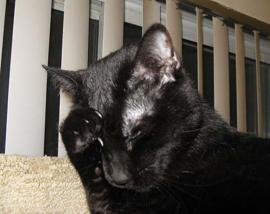 Όταν οι γάτες έχουν Hangover (11)