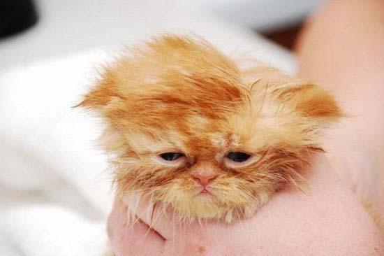 Όταν οι γάτες έχουν Hangover (13)