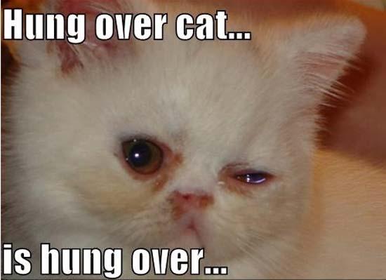 Όταν οι γάτες έχουν Hangover (14)