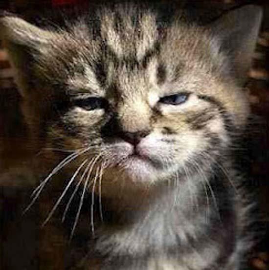 Όταν οι γάτες έχουν Hangover (15)
