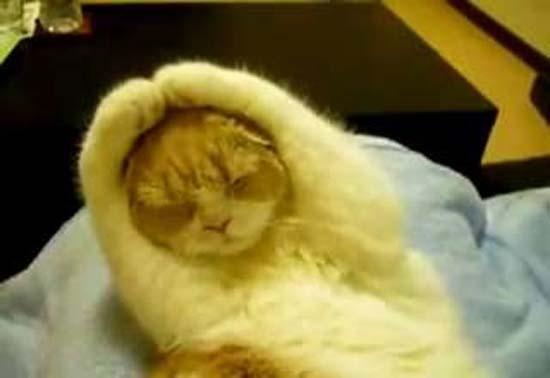 Όταν οι γάτες έχουν Hangover (16)