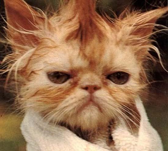 Όταν οι γάτες έχουν Hangover (20)