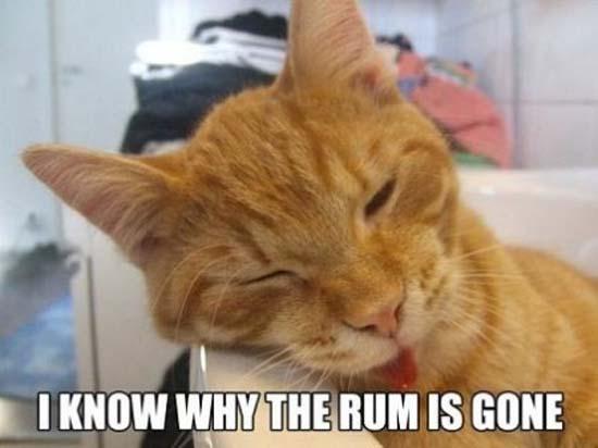 Όταν οι γάτες έχουν Hangover (21)