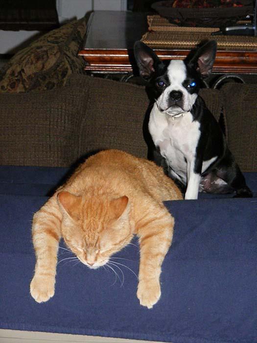 Όταν οι γάτες έχουν Hangover (25)