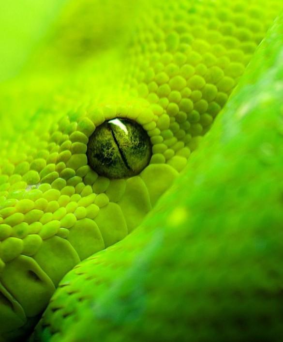 Το μάτι του φιδιού | Φωτογραφία της ημέρας