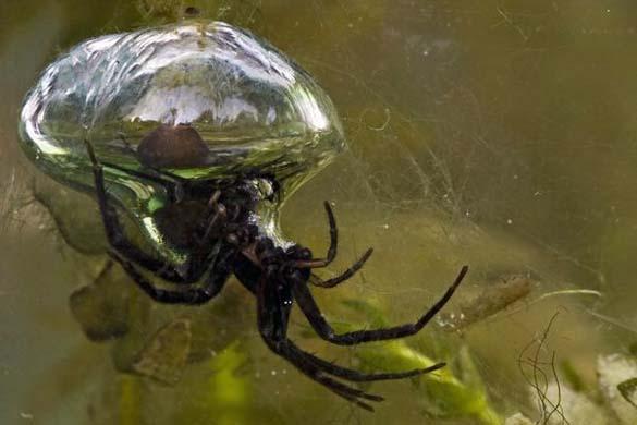 Τα πιο τρομακτικά ζώα του γλυκού νερού (1)
