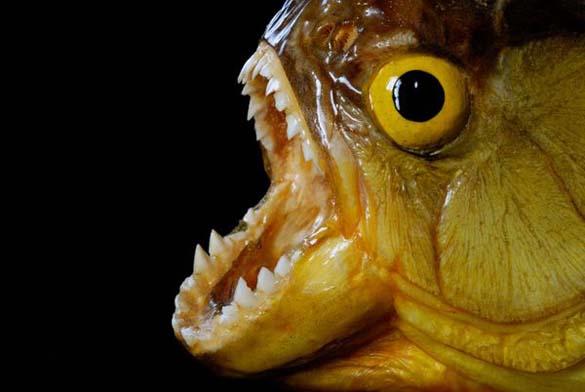 Τα πιο τρομακτικά ζώα του γλυκού νερού (6)