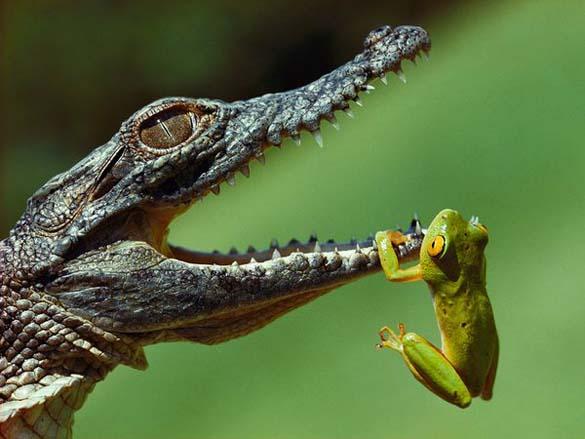 Τα πιο τρομακτικά ζώα του γλυκού νερού (13)