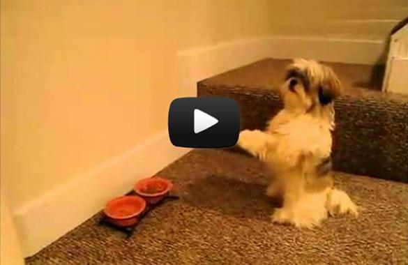 Σκύλος προσεύχεται πριν το φαγητό