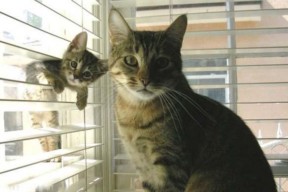Ζώα φωτογραφίζονται μαζί με τις... μινιατούρες τους (4)