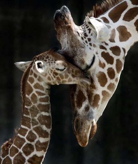 Ζώα φωτογραφίζονται μαζί με τις... μινιατούρες τους (26)