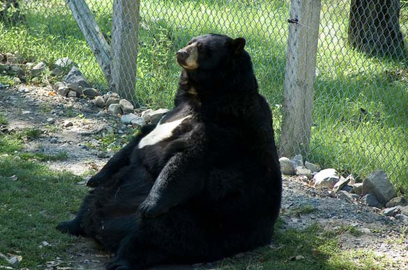 Ζώα που έφαγαν μέχρι σκασμού στις καλοκαιρινές διακοπές (7)