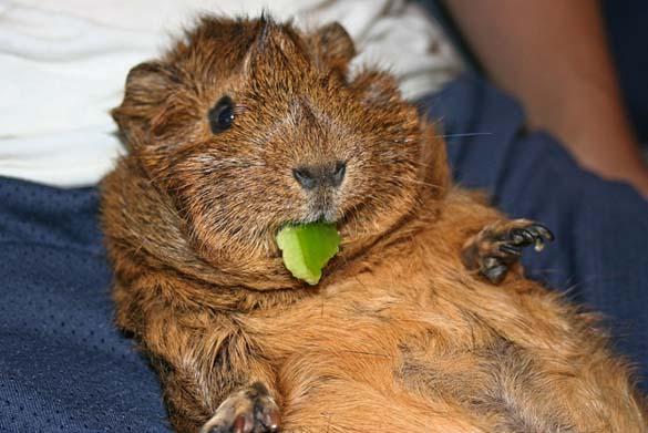 Ζώα που έφαγαν μέχρι σκασμού στις καλοκαιρινές διακοπές (8)