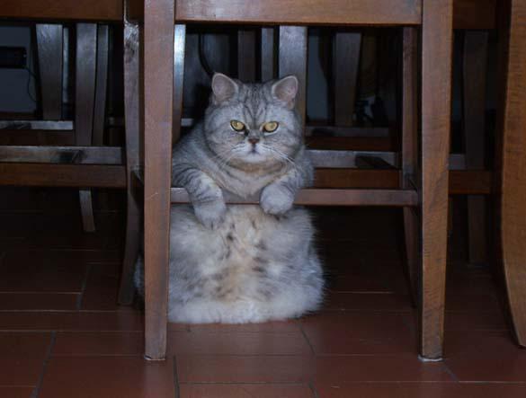 Ζώα που έφαγαν μέχρι σκασμού στις καλοκαιρινές διακοπές (9)