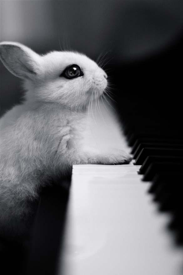 15 ζώα που έγιναν... μουσικοί (3)