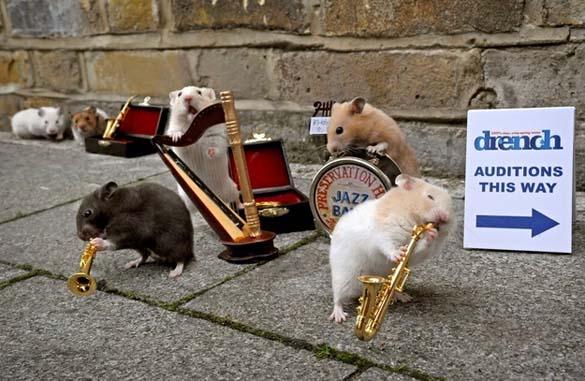 15 ζώα που έγιναν... μουσικοί (5)