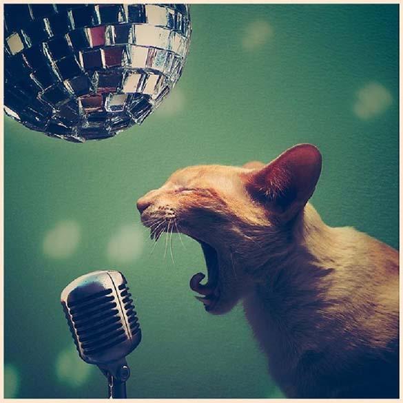 15 ζώα που έγιναν... μουσικοί (7)