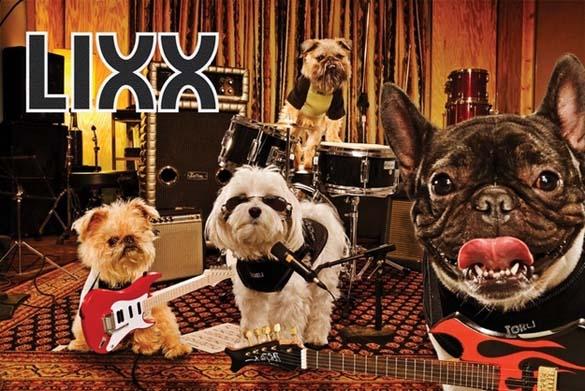15 ζώα που έγιναν... μουσικοί (11)