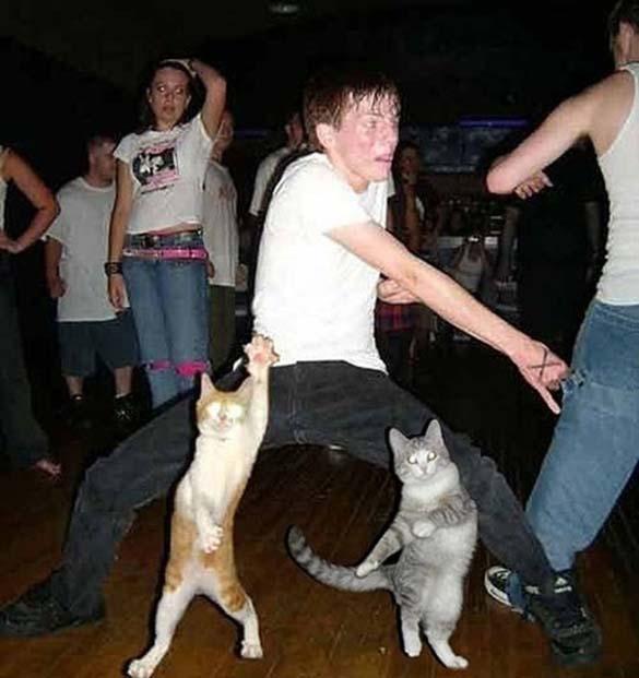 Ζώα που το έριξαν στον χορό (9)
