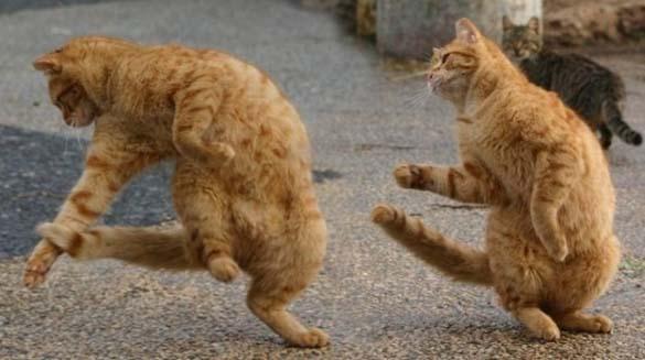 Ζώα που το έριξαν στον χορό (10)