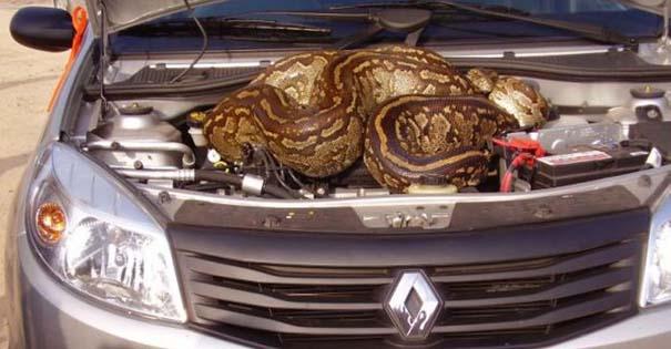 Απίστευτο εύρημα κάτω από το καπό αυτοκινήτου (2)