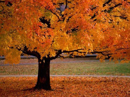 Φθινόπωρο (14)