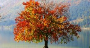 Φθινόπωρο (Φωτογραφικό Αφιέρωμα) #5