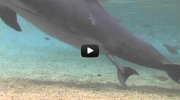 Γέννηση ενός δελφινιού
