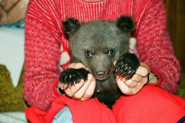 Γυναίκα από τη Λετονία μεγαλώνει αρκούδα μαζί με τα παιδιά της (4)