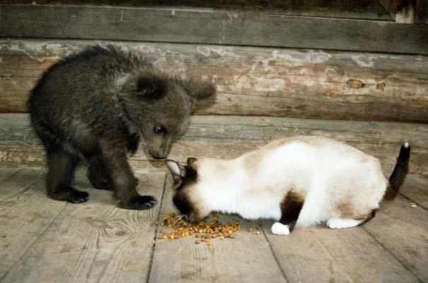 Γυναίκα από τη Λετονία μεγαλώνει αρκούδα μαζί με τα παιδιά της (11)