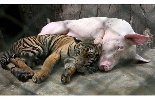 «Κολλητάρια» του ζωικού βασιλείου (7)