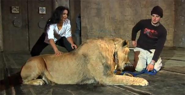Λιοντάρι όρμηξε σε γυναίκα κατά τη διάρκεια φωτογράφησης