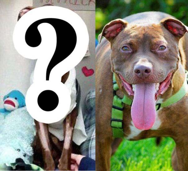 Απίστευτη μεταμόρφωση εγκαταλελειμμένου σκύλου (1)