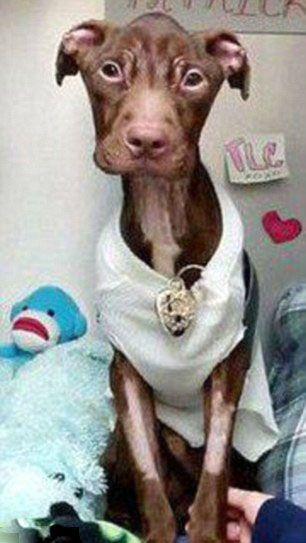 Απίστευτη μεταμόρφωση εγκαταλελειμμένου σκύλου (4)