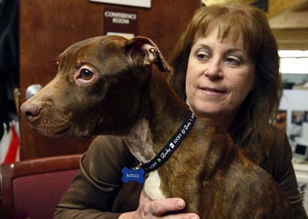 Απίστευτη μεταμόρφωση εγκαταλελειμμένου σκύλου (6)