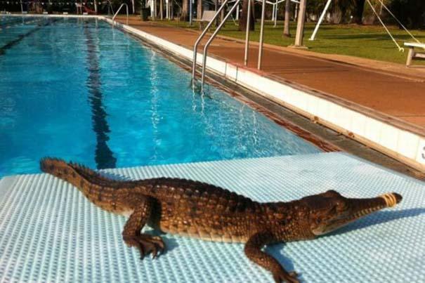 Μόνο στην Αυστραλία (5)