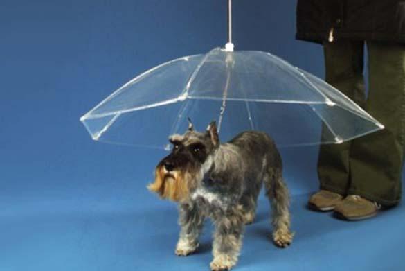 Παράξενες ομπρέλες (4)