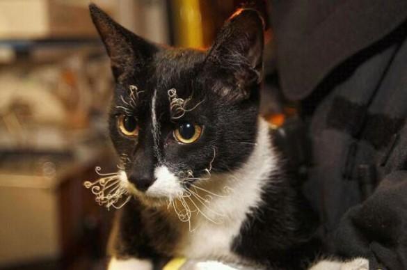 Τα μουστάκια μιας γάτας που σώθηκε από καιγόμενο κτήριο | Φωτογραφία της ημέρας