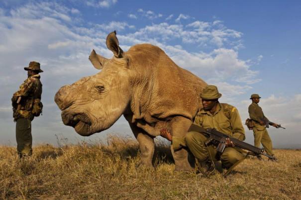Ρινόκερος με σωματοφύλακες | Φωτογραφία της ημέρας