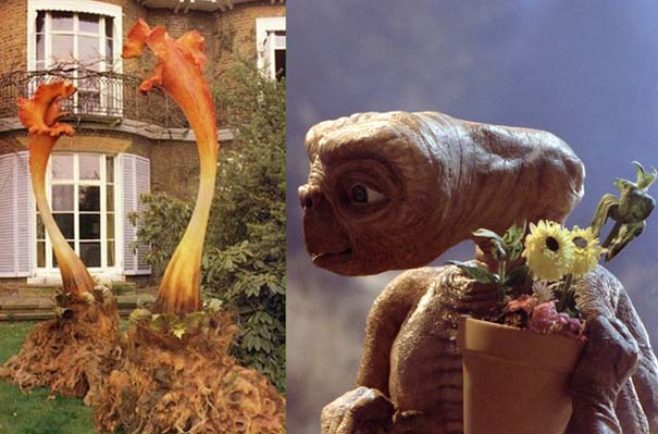 10 πράγματα που δεν γνωρίζατε για τον E.T. (10)