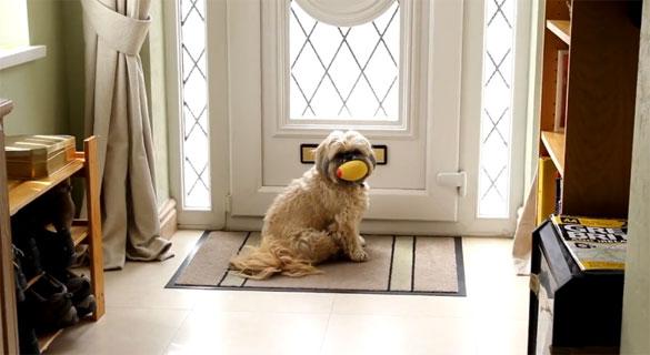 Σκύλος παραλαμβάνει το χαράτσι της ΔΕΗ