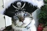 Spangles: Ο αλλήθωρος γάτος που έγινε σταρ του Internet