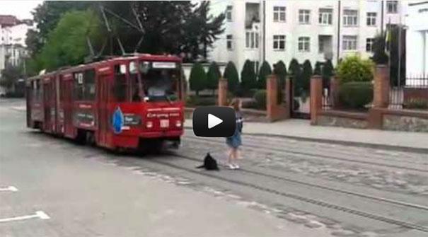 Τεμπέλης σκύλος αρνείται πεισματικά να σηκωθεί για να περάσει το τραμ