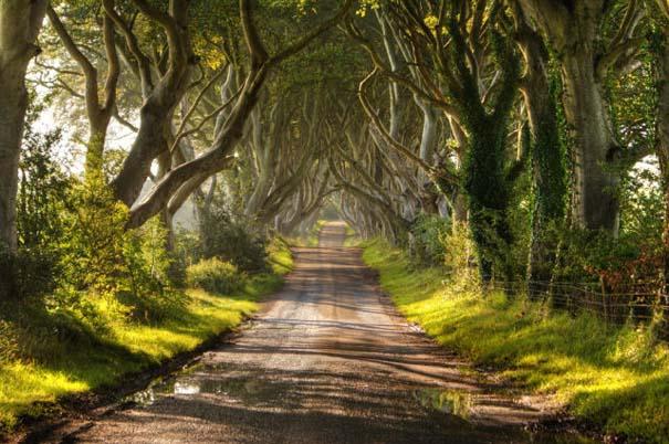 The Dark Hedges: Ένας δρόμος βγαλμένος από παραμύθι (1)
