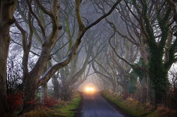 The Dark Hedges: Ένας δρόμος βγαλμένος από παραμύθι (3)