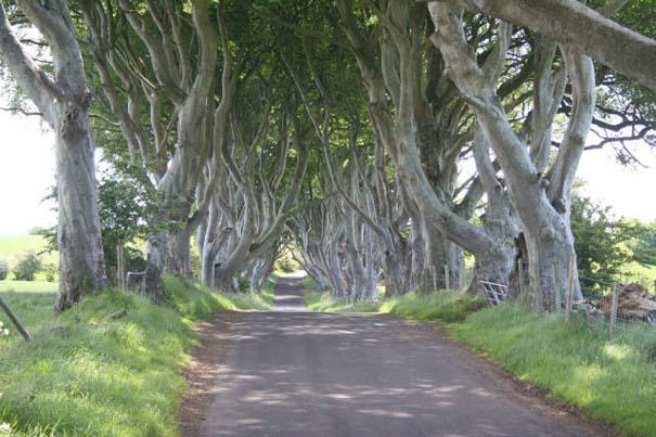 The Dark Hedges: Ένας δρόμος βγαλμένος από παραμύθι (4)
