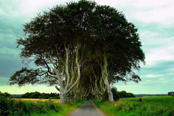 The Dark Hedges: Ένας δρόμος βγαλμένος από παραμύθι (7)
