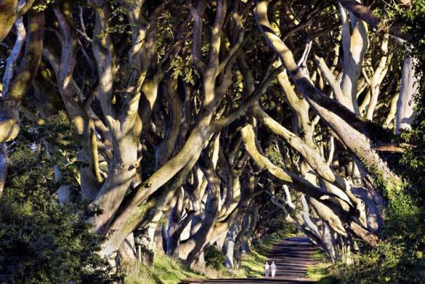 The Dark Hedges: Ένας δρόμος βγαλμένος από παραμύθι (11)