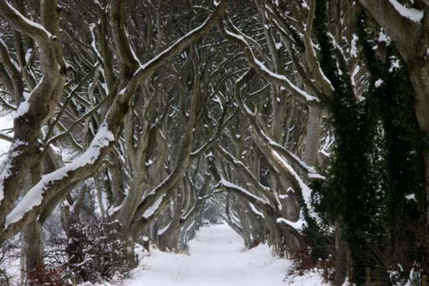 The Dark Hedges: Ένας δρόμος βγαλμένος από παραμύθι (12)