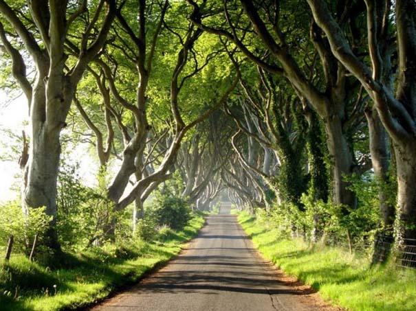 The Dark Hedges: Ένας δρόμος βγαλμένος από παραμύθι (13)